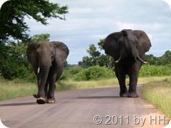 Elefanten_kommen