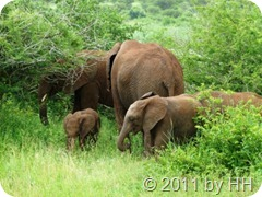 Elefantenkinder